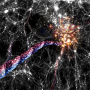 Artist impression of cosmic filaments: huge bridges of galaxies and dark matter connect clusters of galaxies to each other and funnel galaxies on corkscrew like orbits towards and into large clusters that sit at their ends. Image: AIP/ A. Khalatyan/ J. Fohlmeister